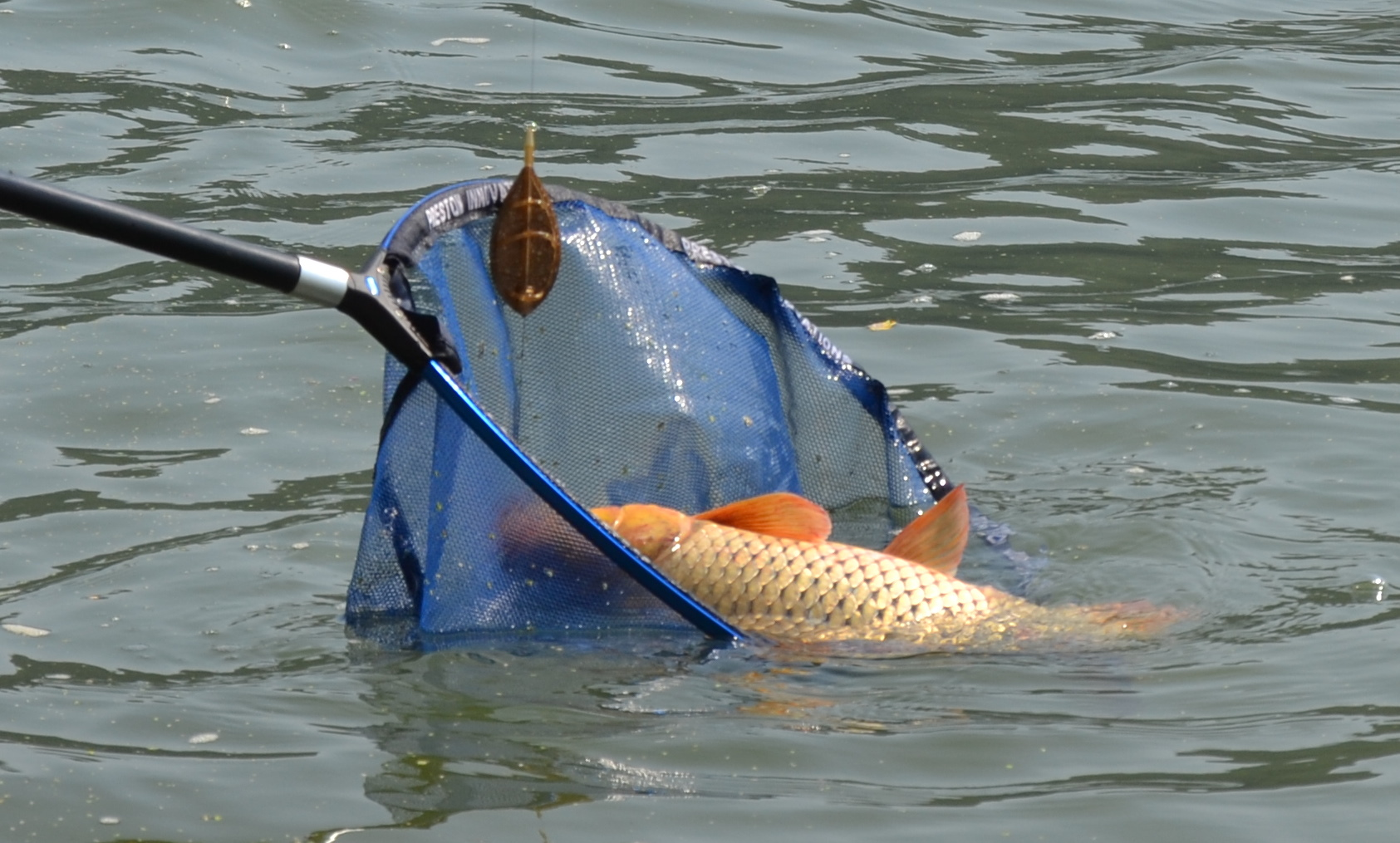 taxe pescuit